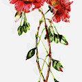 Floral Beauty - Dwp1952017 by Dean Wittle