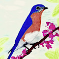 Florida - Eastern - Blue Bird by D Hackett