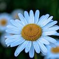 Flower by D N