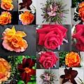 Flower Mix  by Joyce Woodhouse
