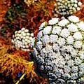 Flower by Nassim Naoura