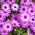 Flower Patterns Collection Set 04 by Az Jackson
