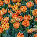 Flower Patterns Collection Set 05 by Az Jackson