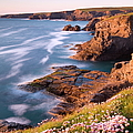 Flowering Sea Thrift Armeria Maritima by Adam Burton / Robertharding