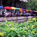 Flowers And Umbrellas Along San Antonio Riverwalk 1x1 by Gregory Ballos