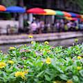 Flowers And Umbrellas Along San Antonio Riverwalk by Gregory Ballos