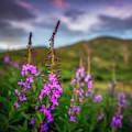 Flowery Sunset by Darren White