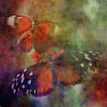Fluttering Pair 8502 Idp_2 by Steven Ward