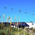 Flying Over Beach Houses by Cynthia Guinn