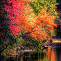 Foliage Over Forge Pond by Anita Pollak