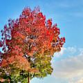 Foliage In Flanders by Fabrizio Troiani