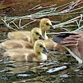 Following Mom's Lead by Debbie Stahre