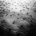 Footprints In The Sand by Miles Whittingham