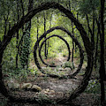 Forest Circle Trapped Installation  by Kasey Jones