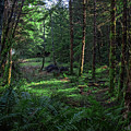 Forest Clearing by Bill Posner