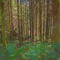 Forest In Paint by Bill Posner