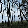 Forest In Riddersholm Naturreservat by Chani Demuijlder