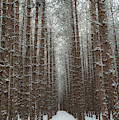 Forest In Sleeping Bear Dunes In January by Twenty Two North Photography
