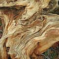 Forest Music 2 by Lynda Lehmann
