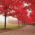 Forest Park Maple Corridor by Scott Rackers