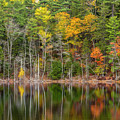 Forest Reflecting by Karin Pinkham