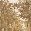 Forest Road Wi  by Cornelis Hendrickszoon Vroom       or