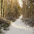Forest Track In Winter by Victor Lord Denovan