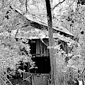 Forgotten Barn Black And White by Lisa Wooten