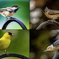 Four Song Birds by Onyonet  Photo Studios