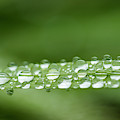Fragile Rain by Robert Potts