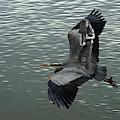 Free Birds In Flight by Ben Upham
