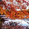 French Creek 15-107 by Scott McAllister
