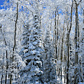 Fresh Snow On Grand Mesa by Ray Mathis