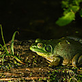 Frog Party by Edward Peterson