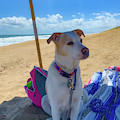 Fun Doggie Day At The Beach by Lora J Wilson