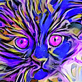 Funny Face Kitten Purple Eyes by Don Northup