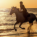 Galloping At Sunset by Arterra Picture Library