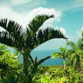 Garden Of Eden Tropical Paradise Puohokamoa Maui Hawaii by Sharon Mau