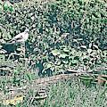 Garden Pigeon, Abbie Shores Faa Challenge 19 by Lise Winne