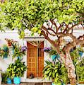 Garden Trees On Cozy Street by Ariadna De Raadt