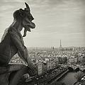 Gargoyle Of Notre Dame by Zeb Andrews