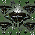 Giant Swallowtail Butterflies by Rockin Docks Deluxephotos