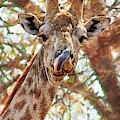 Giraffe Says Yum by Kay Brewer