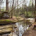 Glenrock Branch On The Natchez Trace by Susan Rissi Tregoning