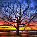 Glory To God Sunrise Oak Madison County Georgia Landscape Art by Reid Callaway