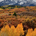 Glowing Aspens At Dallas Divide by Ray Mathis