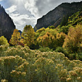 Glowing Fall Colors In Glenwood Canyon by Ray Mathis