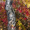 Gnarled Tree Trunk - Dezadeash Lake - Yukon Territory  by Cathy Mahnke