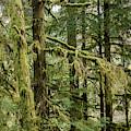 Gnat Creek Forest by Robert Potts