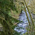 Gnat Creek by Robert Potts